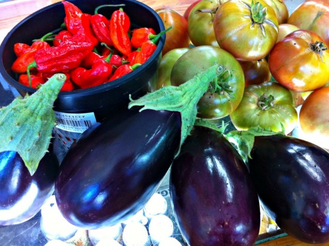 The Eggplant Demystified – Health Benefits, Grow Tips & Recipe